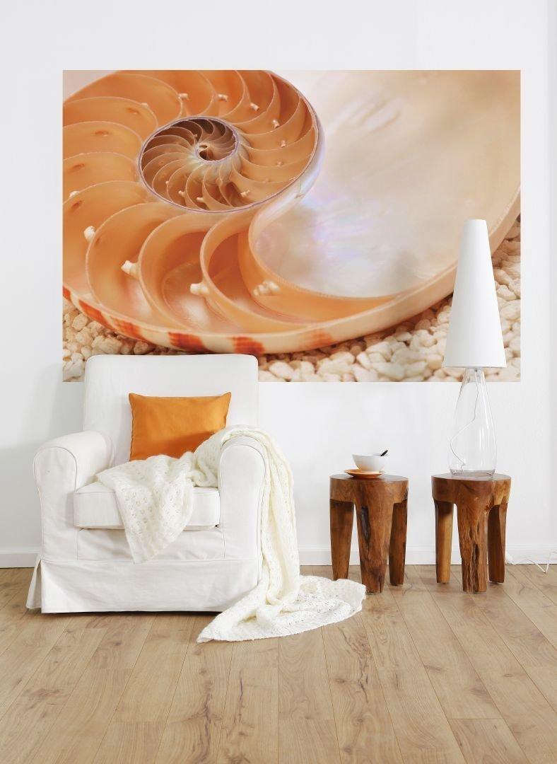 Fototapeta 184x127 1-601 Muszla Nautilus Natura Przyroda
