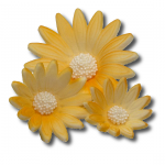 Rumianek 20 szt. komplet żółty 3 wielkości