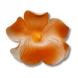 HOKUS - Miltonia 10 szt.  pomarańczowa