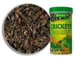 Tropical Crickets 250ml/25g
