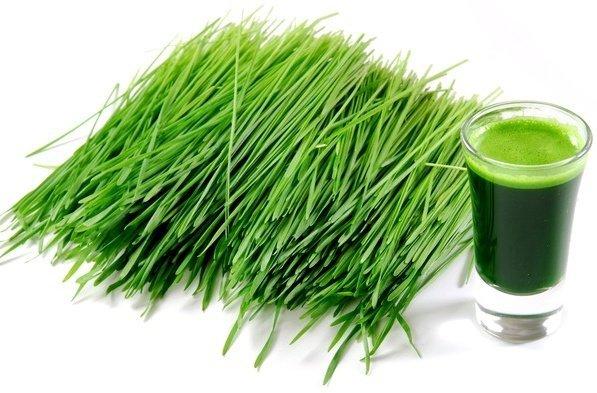 Zielony młody jęczmień sproszkowany sok!