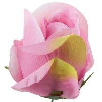 Róża Pąk Brudny Róż [Komplet 12szt]