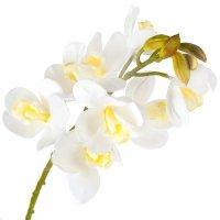 Gałązka Storczyk Biały Z Żółtym Środkiem 62cm [ Komplet 4szt ]
