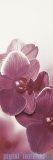 Paradyż Abrila kwiat B inserto ścienne 20x60