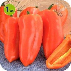Papryka Ariella Orange