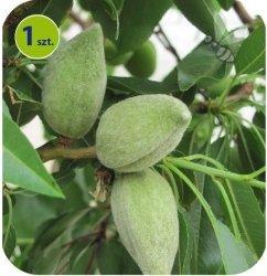 Migdałowiec Nut Me® Almond 1 sztuka
