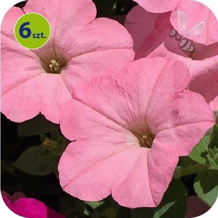 Alpetunia Soft Pink