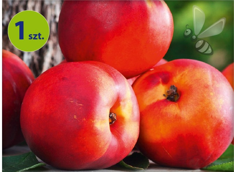 Nektarynka 'Fruit Me® Necta Me 1 sztuka