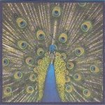 The Bluetones - Expecting To Fly (CD)