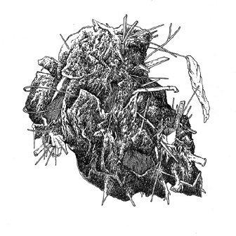 Ekstyrpacja Miazgi (CD)