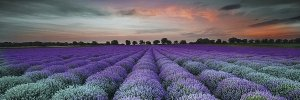 CERAMIKA KONSKIE lavender field glass inserto 25x75 szt g1