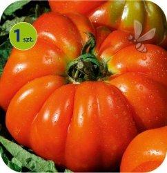 Pomidor szczepiony Delizia