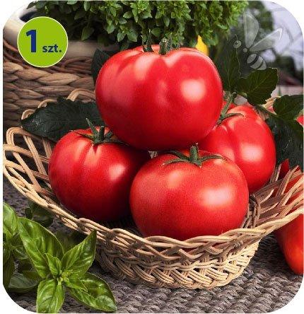 pomidor Matias
