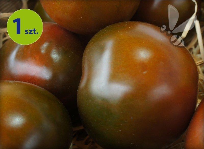Pomidor szczepiony Kakao
