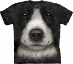 Border Collie Face - The Mountain