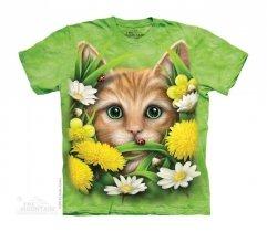 Kitten In Springtime - The Mountain Junior