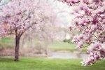 Wiosna, wiosna, ach, to Ty! Za bo kochamy tę porę roku?