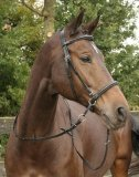 Ogłowie bezwędzidłowe - HARRY'S HORSE
