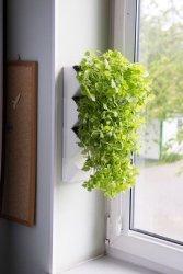 Aquael Versa Garden Herbs Zielone Ściany Zielnik