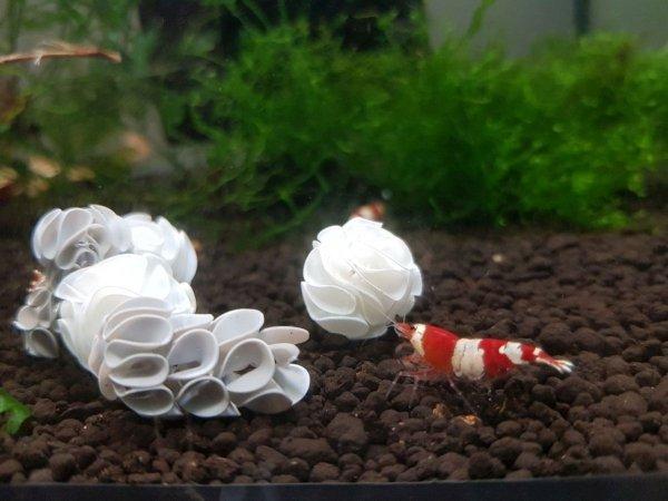 Baby Shrimp Shelters Czarny 20 szt