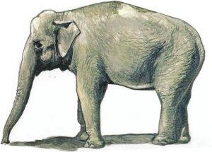 CMK F48341 Asian Elephant (1 figure) 1/48