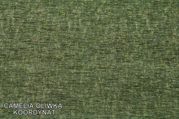Camelia oliwka koordynat