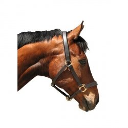 Kantar skórzany dla koni zimnokrwistych
