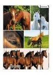 Teczka rysunkowa A4 z gumką HORSES Konie (298952)
