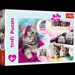 TREFL Puzzle 160 el. CATS Urocze kotki (15371)