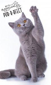 Ręcznik dziecięcy CAT Kotek  30 x 50 cm (TNL191342)