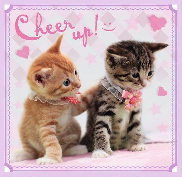 TREFL Puzzle 3 w 1 SŁODKIE KOTKI, z kotami (34809)