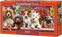 Puzzle 600 Castorland B-060368 Szczenięta na Półce