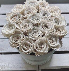 Ecru żywe WIECZNE róże w dużym białym boxie