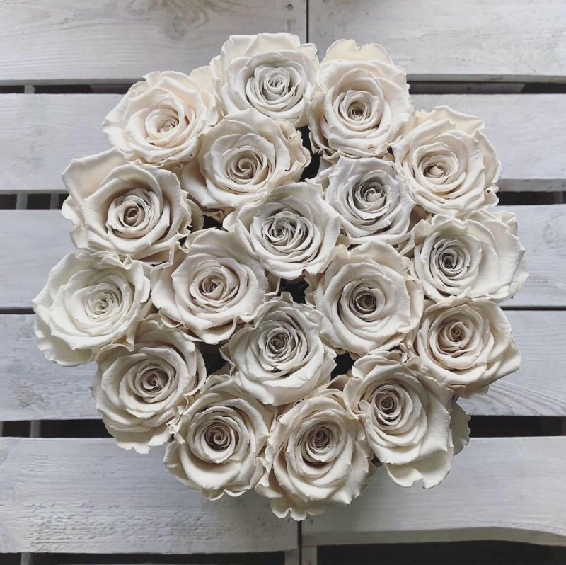 Kremowe żywe WIECZNE róże w dużym białym boxie
