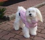 sweterek PRECIOUS różowy
