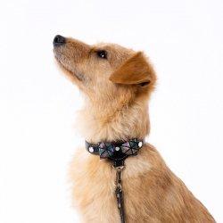 Luksusowa obroża PRESTIGE czarna + Dogs