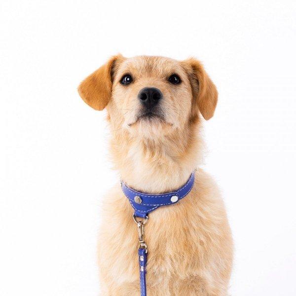 Luksusowa obroża PRESTIGE granatowa dla małego psa