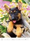 Kalendarz ścienny wieloplanszowy Puppies 2021 - marzec 2021