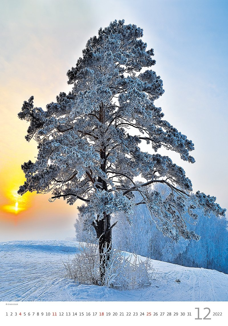 Kalendarz ścienny wieloplanszowy Trees 2022 - grudzień 2022
