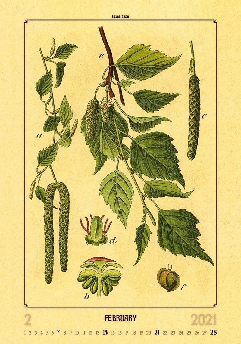 Kalendarz ścienny wieloplanszowy Herbarium 2021 - luty 2021