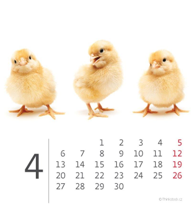 Kalendarz biurkowy mini Zwierzątka 2020 - kwiecień
