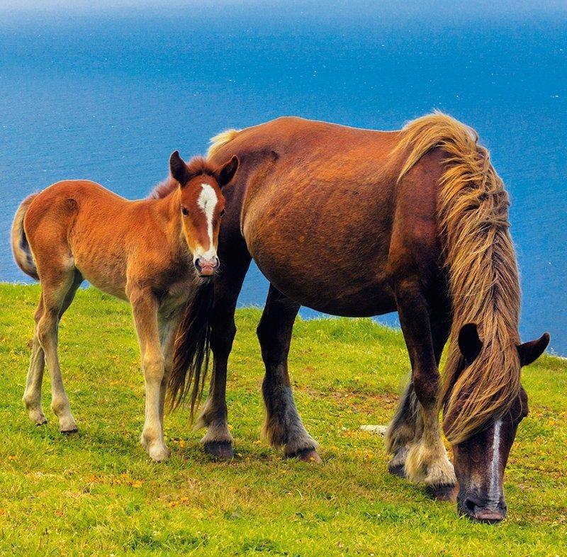 Kalendarz ścienny wieloplanszowy Horses 2022 z naklejkami - styczeń 2022