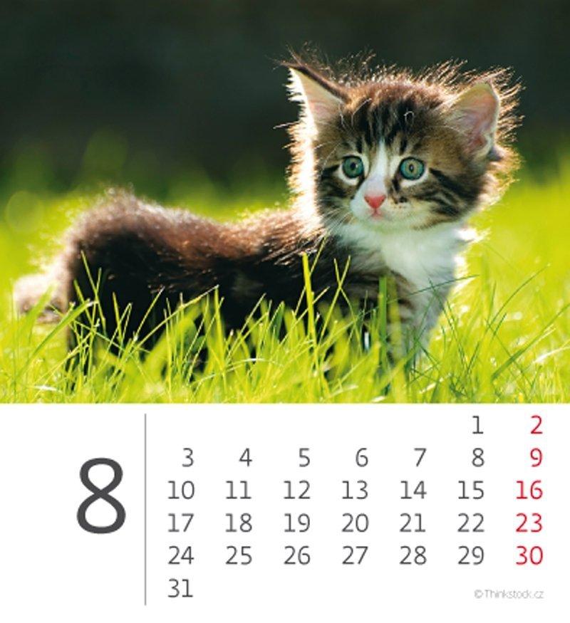 Kalendarz biurkowy 2020 mini Kotki - sierpień