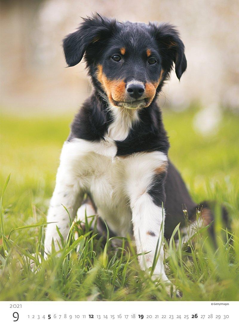 Kalendarz ścienny wieloplanszowy Puppies 2021 - wrzesień 2021
