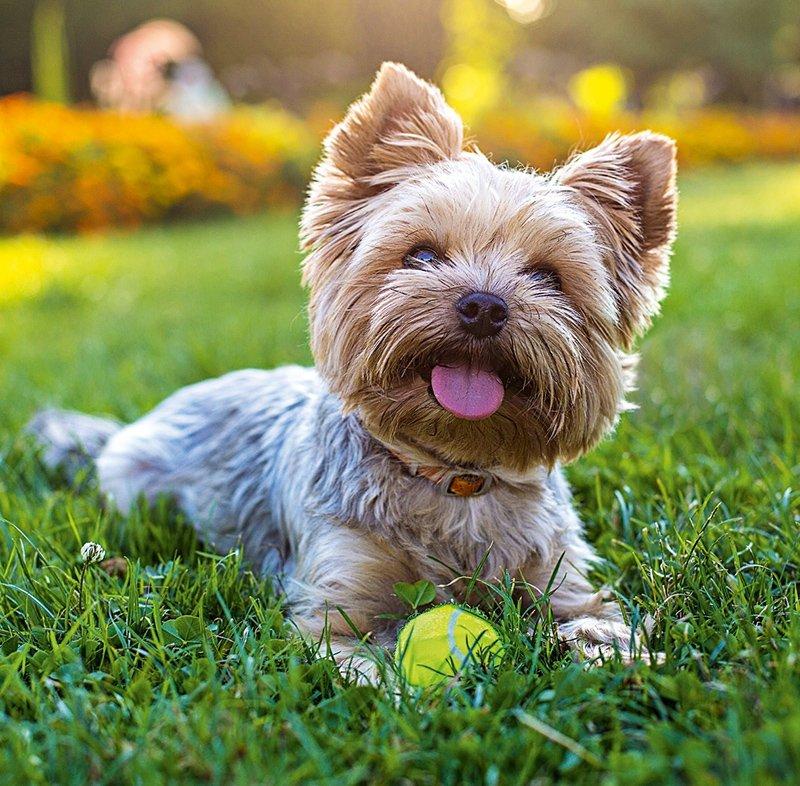 Kalendarz ścienny wieloplanszowy Dogs 2021 z naklejkami - czerwiec 2021