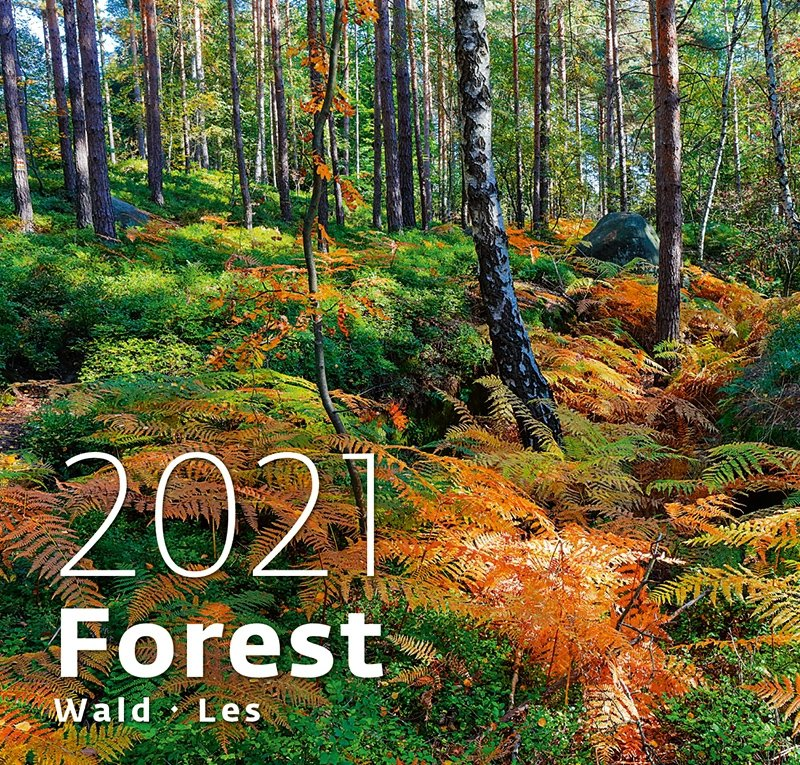 Kalendarz ścienny wieloplanszowy Forest 2021 - okładka