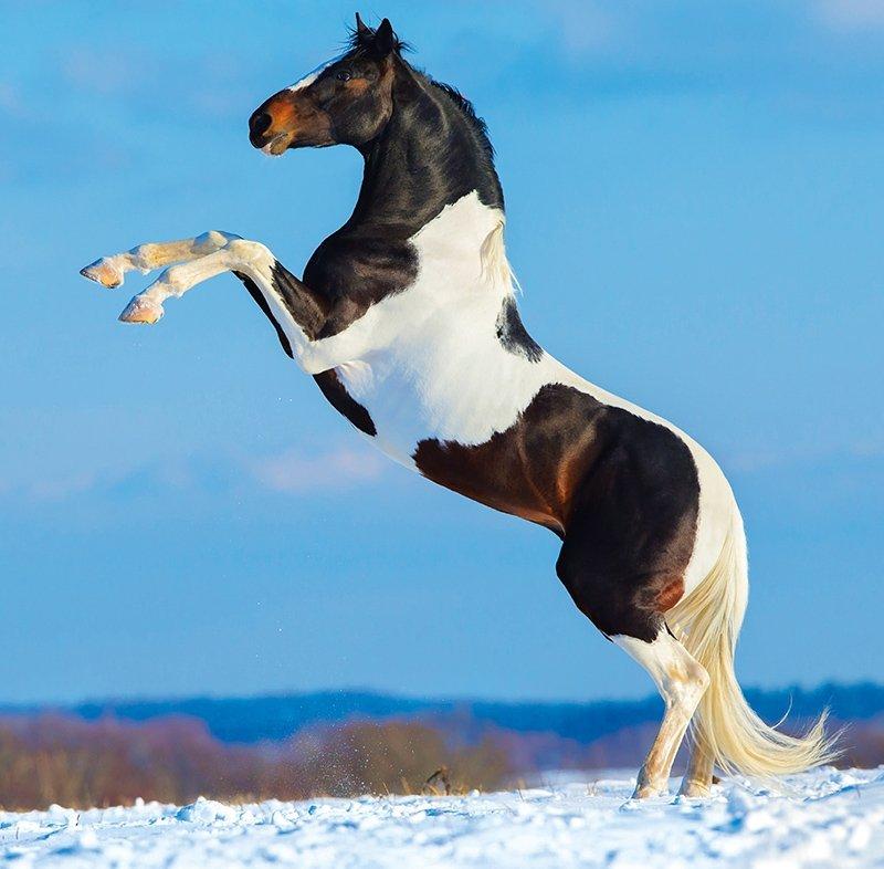 Kalendarz ścienny wieloplanszowy Horses 2022 z naklejkami - grudzień 2022
