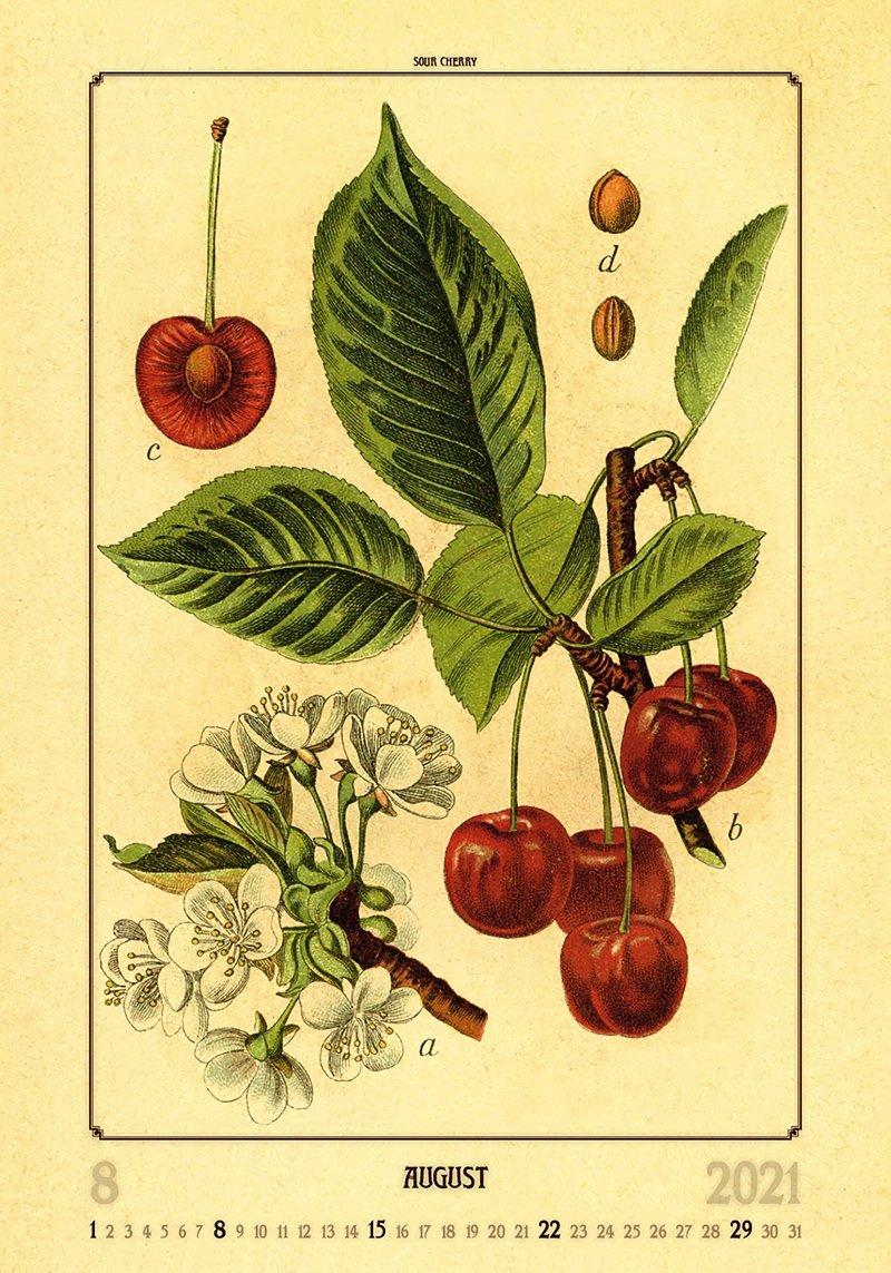 Kalendarz ścienny wieloplanszowy Herbarium 2021 - sierpień 2021