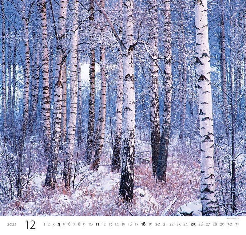 Kalendarz ścienny wieloplanszowy Forest 2022 - grudzień 2022