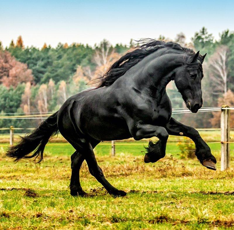 Kalendarz ścienny wieloplanszowy Horses 2022 z naklejkami - listopad 2022